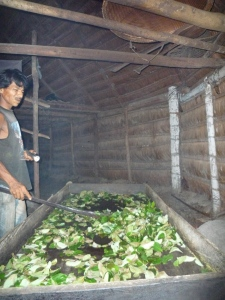 Toasting Coca Leaves in the Amazon